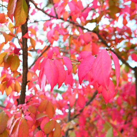 autumn.png